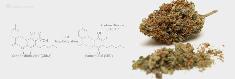 Decarboxylating of CBD Buds