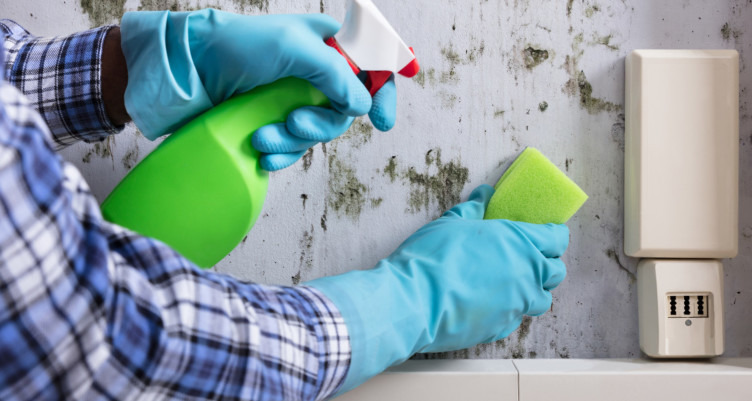 Deal with That Mold Problem