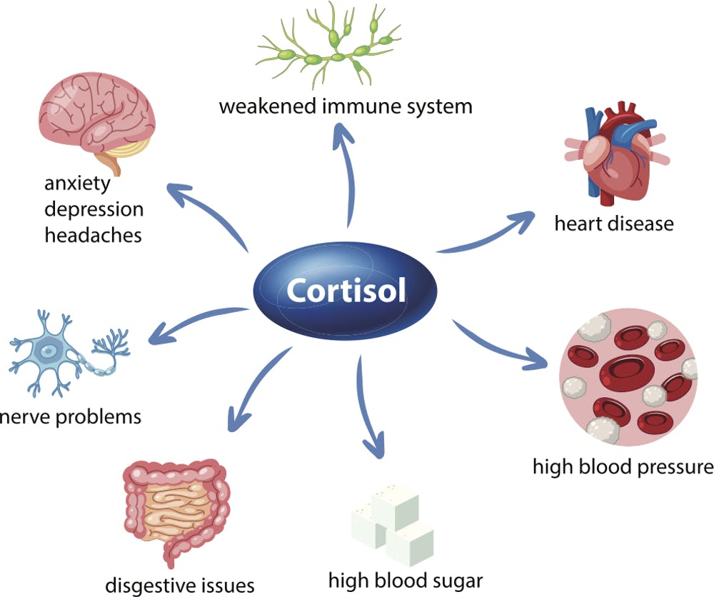 Supplements to Reduce Cortisol