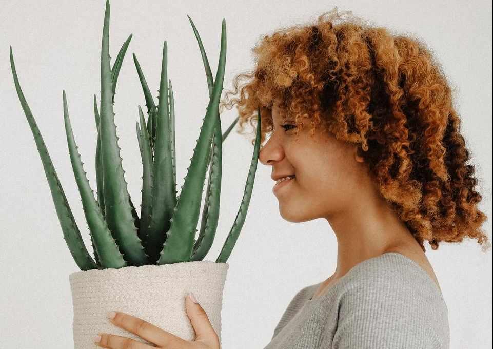 Benefits of Aloe Vera On Hair