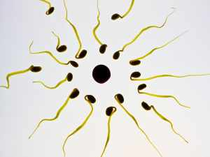 Sperm Donor Requirements