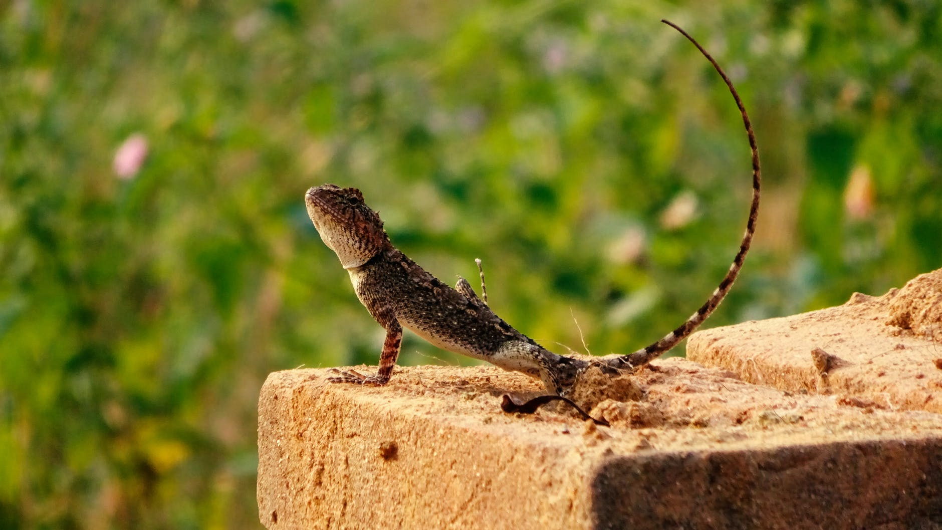 How to Get Rid of Lizards at Home Without Killing Them
